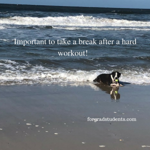 dog resting at ocean shore with ball in mouth. Important to take a break after a hard workout!
